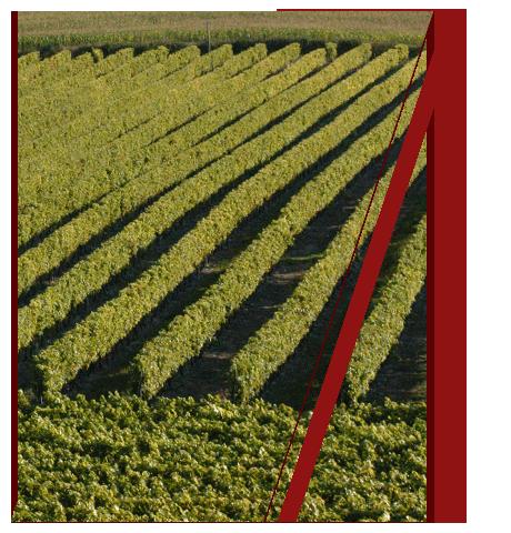 Ets Vedelago Daniel | spécialiste de la conception, la fabrication et la commercialisation de matériel agricole ( «viticole» )